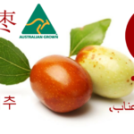 Royal Jujubes (Chinese Dates)