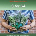 ecoLEAF Special – Rocket, Kale & Spinach